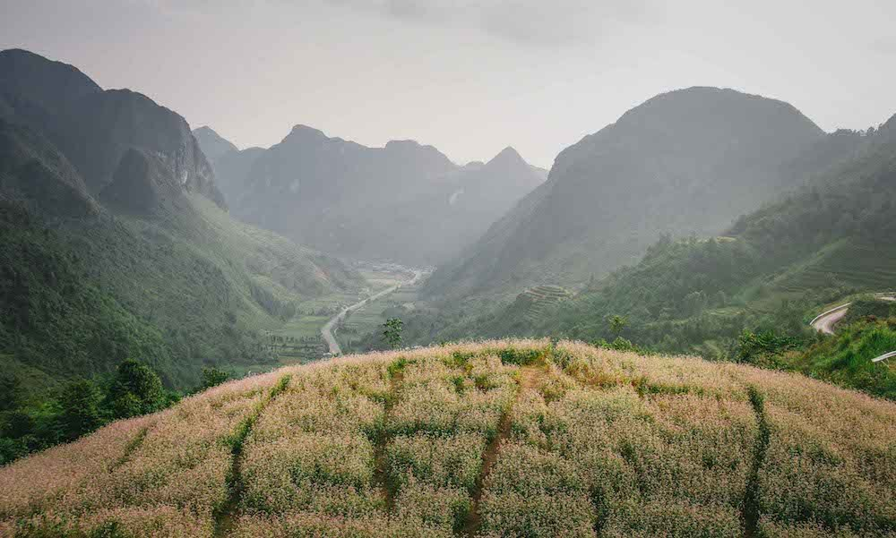 Ha giang buckwheat flower fields