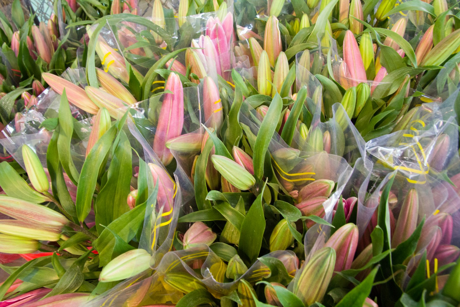 where is ho thi ky flower market saigon